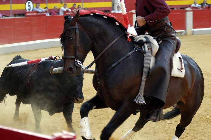 Bullfighting Overview