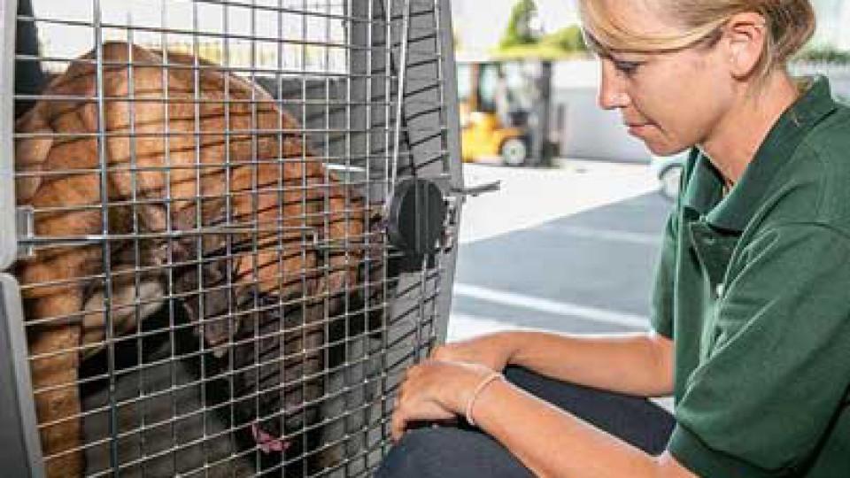 Change for Animals Foundation