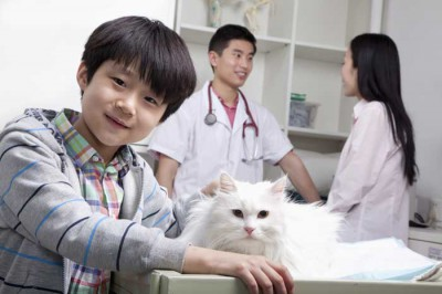 A boy visits a Beijing veterinarian with his cat
