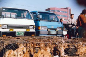 Dog & Cat Markets (South Korea)