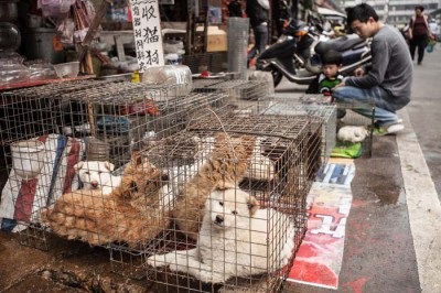 Dogs for sale in China