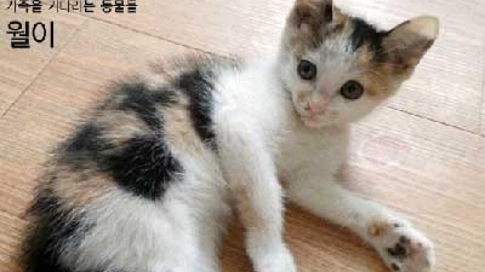 Korea Animal Rights